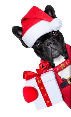 frenchbulldogchristmas2.jpg